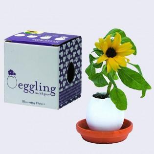 Eggling Tournesol petite plante