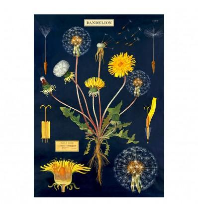 Affiche Pdagogique Dandelion Pissenlit