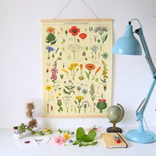 Affiche fleurs Spécimens sauvages - Cavallini & Co