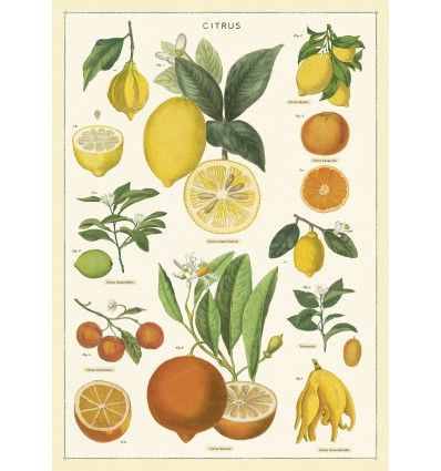 Affiche Citrons - Cavallini & Co