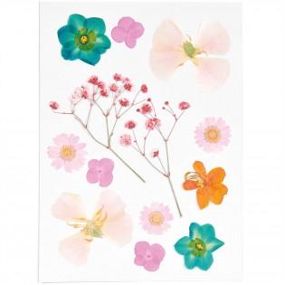 Fleurs pressées Orange Turquoise - Rico Design