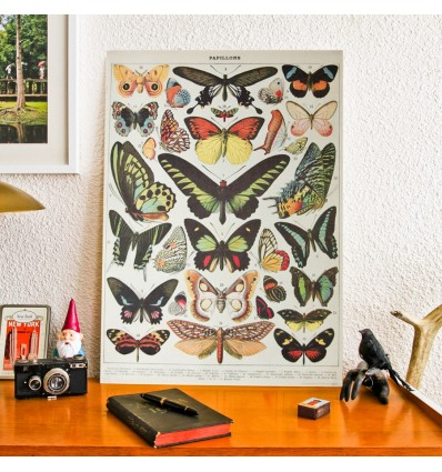 Affiche Papillons - Cavallini & Co